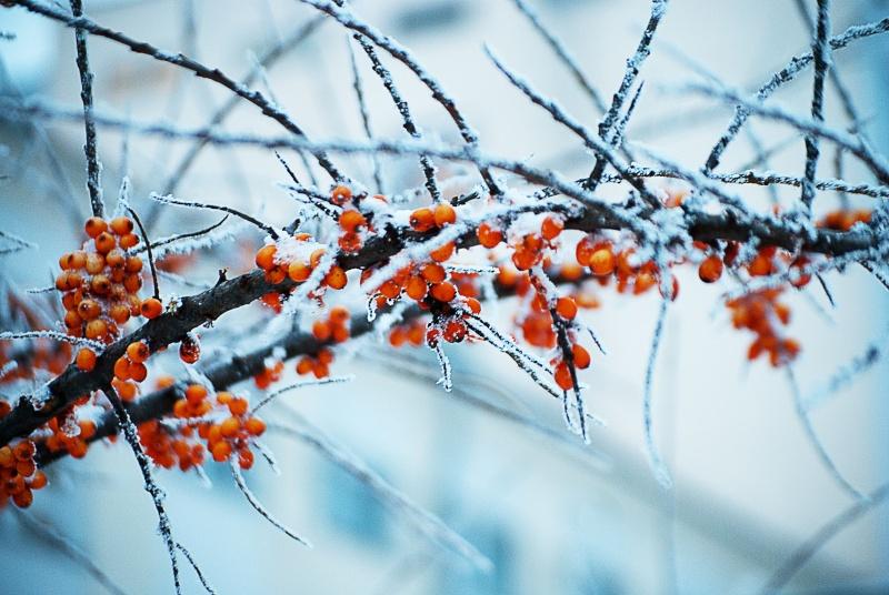посвящена матушке зиме-фотографии и стихи об этом времени года.