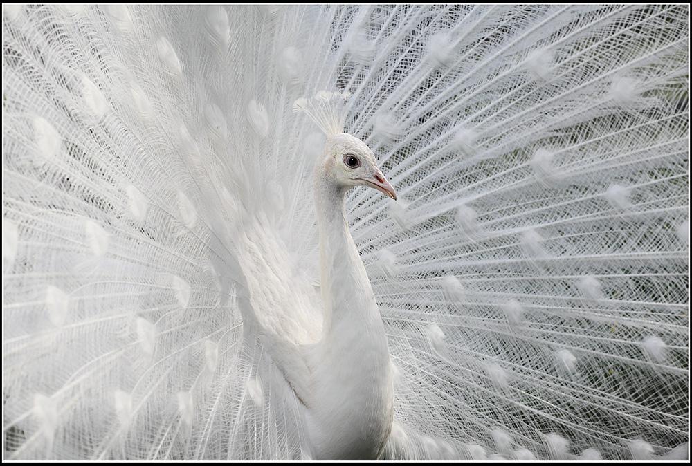 Белый цвет картинки 1